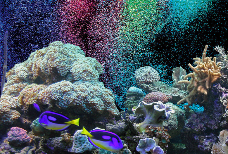 poster Reef